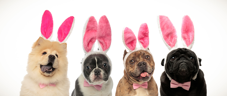 Halloween-group-dogs-wearing-bunny ears costume