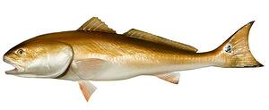 how catching redfish taught me about managing people stuff