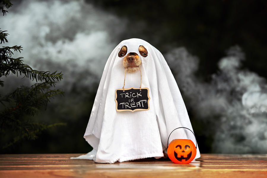 Halloween Dog-In-Ghost-Costume-with sign